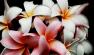 Florarie | FlowerUp