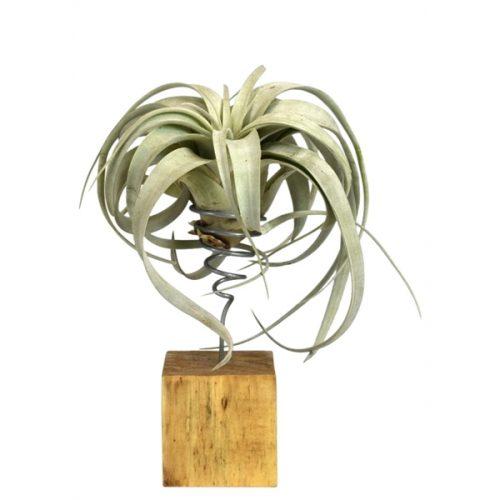 plante bucuresti